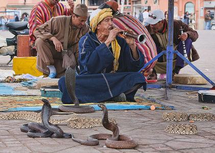 Making it in Marrakech