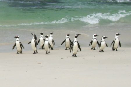 Capetown Colony
